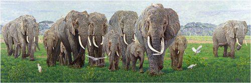 Echo of Amboseli