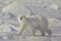 Polar Encounter