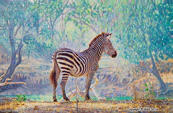 canvas prints,art print,Zebra Painting by wildlife artist BAS,Fine Art Print on canvas, oil painting