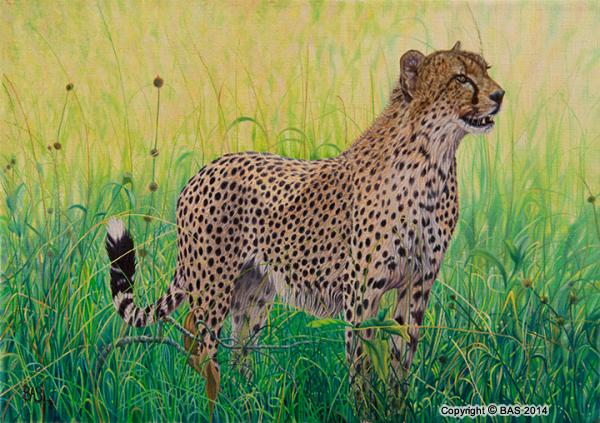 canvas prints,art printsCheetah,big cat, africa, oil painting,wildlife artist BAS,masai mara,kenya