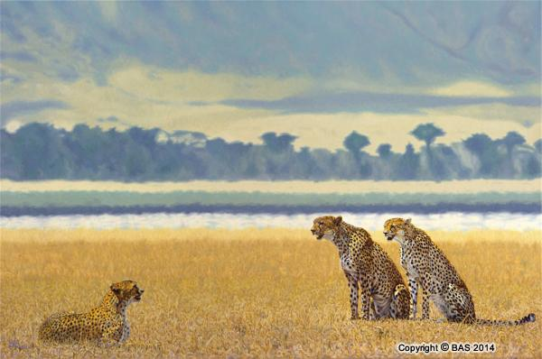 cheetah painting, cheetah art prints, cheetahs,wildlife art,wildlife art paintings,cheetah,big cat,oil painting,canvas prints,ngorogoro crater,ngorogoro national park,tanzania,