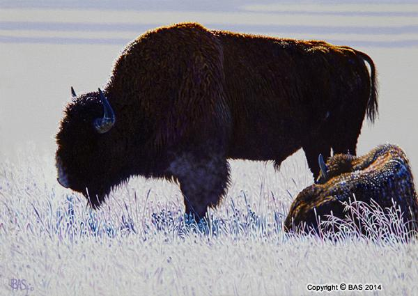wildlife art,wildlife art paintings,bas,art of bas,Buffalo Painting,Yellowstone National Park,oil painting,canvas prints,Shakespeare,wordsworth,saint francis of assisi
