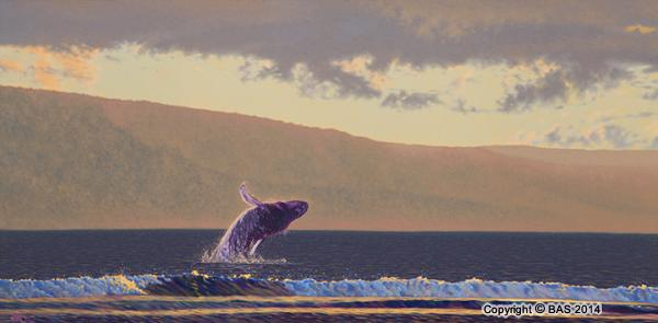 wildlife art,wildlife art paintings,oil painting,bas,art of bas,Humpback Whale Painting,whale painting,oil painting on canvas,Lanai Maui Hawaii