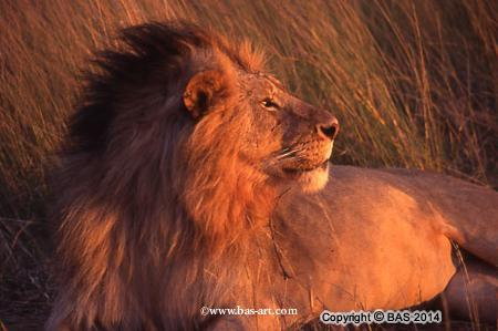 wildlife adventures,wildlife adventure,wildlife,bas,art of bas,
